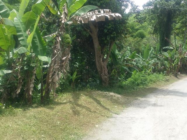 RE/MAX real estate, Jamaica, Lucea, EATON, LUCEA Hanover Lucea