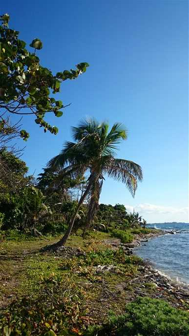 Remax real estate, Honduras, Other, 85 feet of Little Bight Beach Front