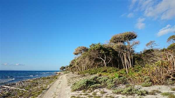 Remax real estate, Honduras, Utila, 110 Feet of Beach Front at Little Bight
