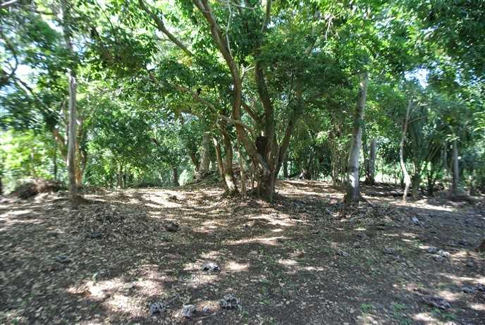 Remax real estate, Honduras, Utila, High Interior Lot-Fertile Ground