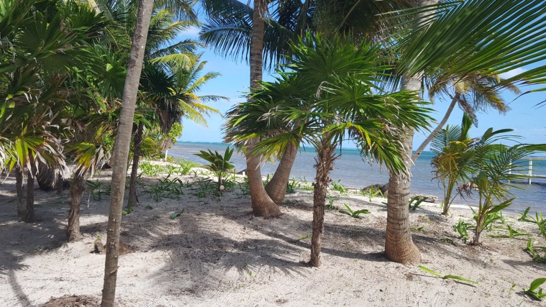 Remax real estate, Belize, San Pedro, Caribbean Beach Front