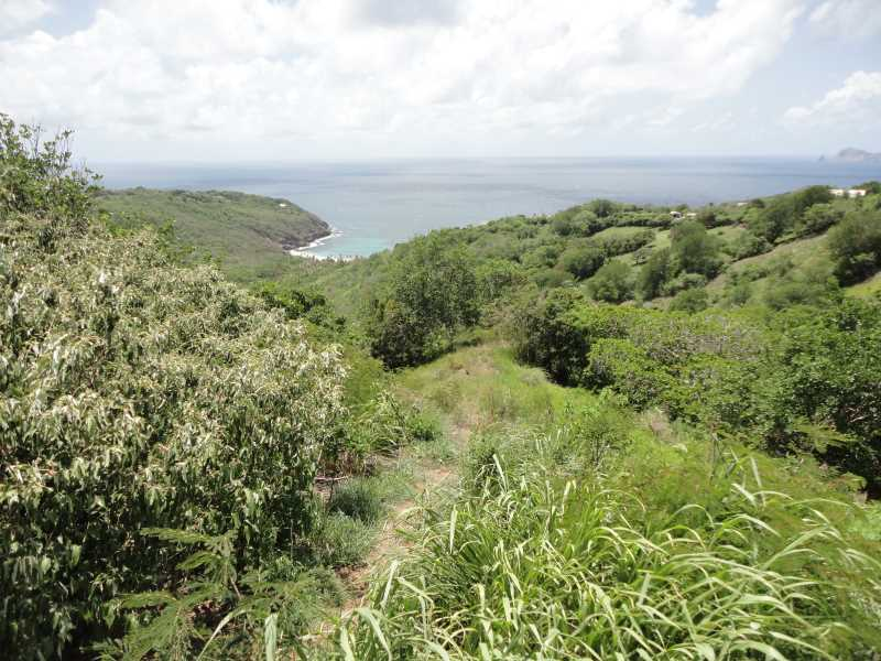 RE/MAX real estate, Saint Vincent and the Grenadines, Mount Pleasant, MOUNT PLEASANT ACREAGE