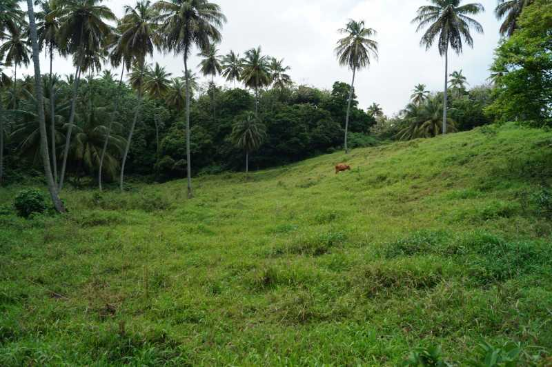 RE/MAX real estate, St. Vincent and the Grenadines, Spring garden, 4.9  ACRE LOT - SPRING  ST. VINCENT