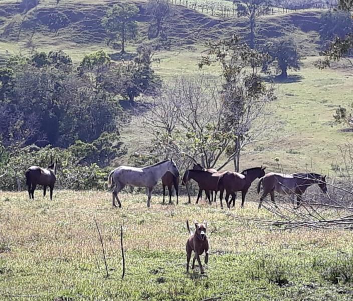 Remax real estate, Costa Rica, San Carlos-Monterrey, Farm / Monterrey de San Carlos / 736 Hectares
