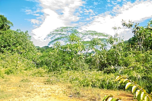 Remax real estate, Costa Rica, Damas, For Sale 4.8 ha lot in San Antonio de Damas - Financing Available