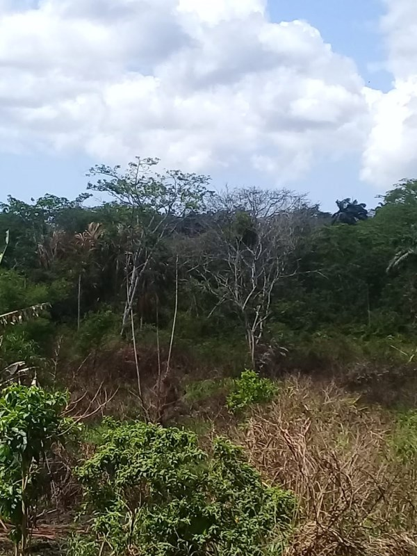 RE/MAX real estate, Trinidad and Tobago, Roussillac, 3 1/2  Lots for Sale