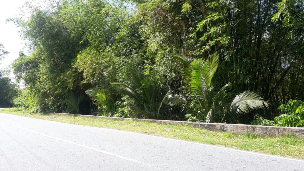RE/MAX real estate, Trinidad and Tobago, Rio Claro, 16 acres of Land Ideal for Development