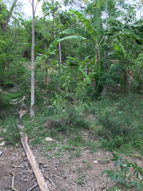 RE/MAX real estate, Haiti, Jacmel - Marigot,  Land for Sales in Beautiful  Cayes Jacmel  ,Jacmel Haiti .