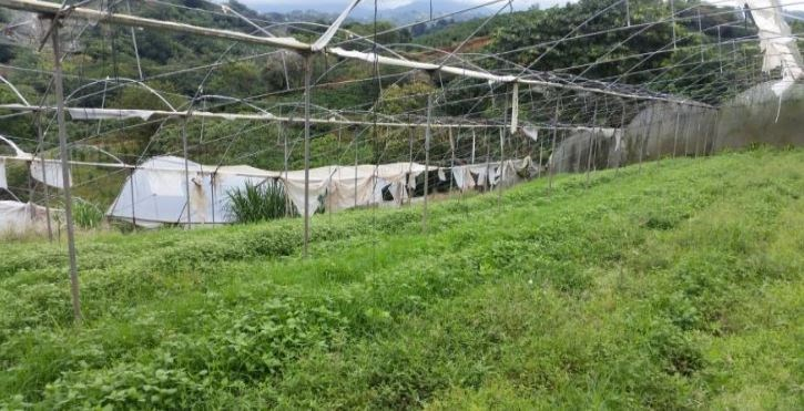 Remax real estate, Costa Rica, Grecia, Farm for agriculture and housing for sale close to Grecia, Alajuela, with 2 houses