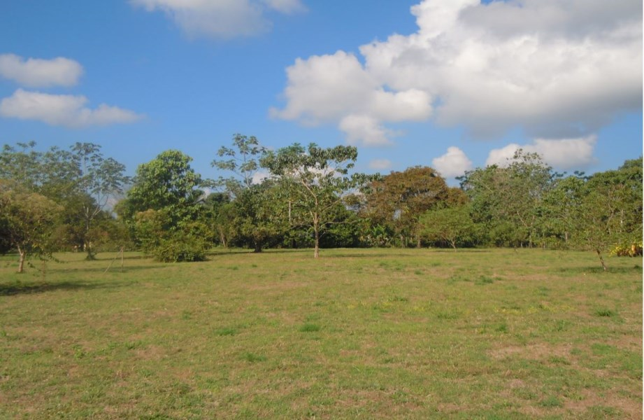 Remax real estate, Costa Rica, Quepos, Villanueva-Quepos: Large farm for sale, mostly flat land
