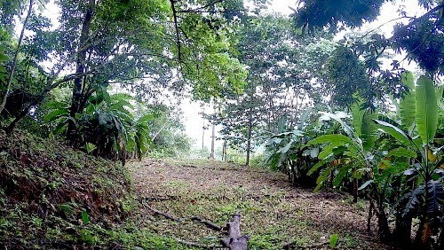 Remax real estate, Costa Rica, Puerto Cortés, Cortes Waterfall Farm. Property lines are characterized by picturesque waterfalls on 3 sides.  Before $575,000. NOW $525,000 JJ