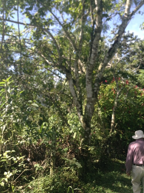 Remax real estate, Costa Rica, Puriscal-Santiago, LOT IN PURISCAL CANALES 70 HECTARES EXTENSIVE PRIMARY FOREST. INCREDIBLE OPPORTUNITY $ 70,000. B