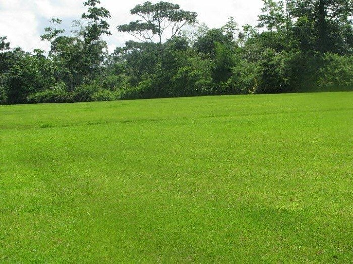 Remax real estate, Costa Rica, Guápiles, Farm property for sale in Guapiles. Great business in operation. J