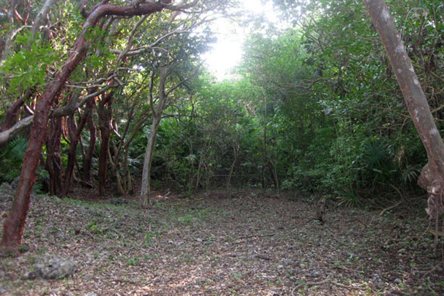 Remax real estate, Honduras, Utila,  Swanix Ridge  Inland5.38 Acre Gumbo Limbo Finca