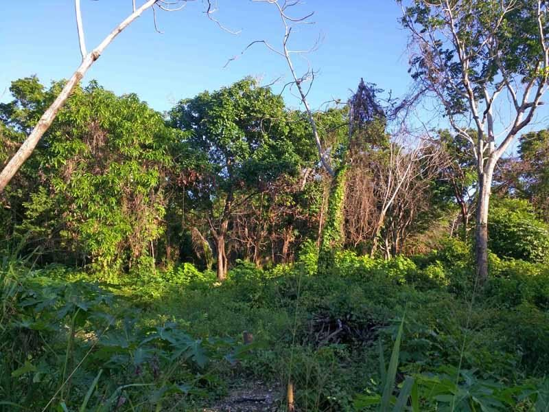 Remax real estate, Honduras, Utila,  quiet  outside of town1.69 acre Green forested oasis