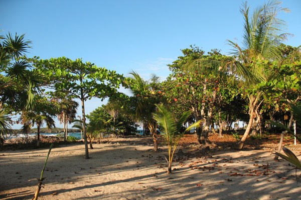 Remax real estate, Honduras, Utila,  Paradise Cove  East Shore0.36 Acre Ocean View Resident