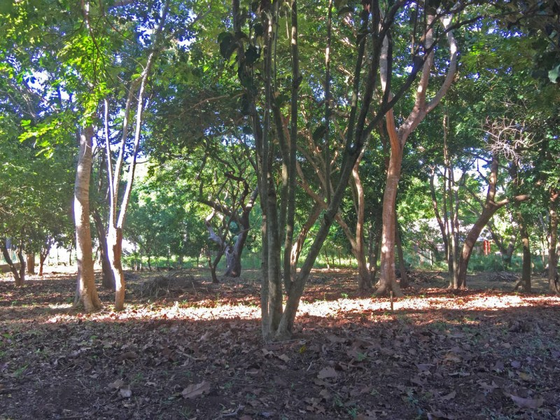 Remax real estate, Honduras, Utila, Minutes from town Near BICA0.27 acre Caribbean Home site