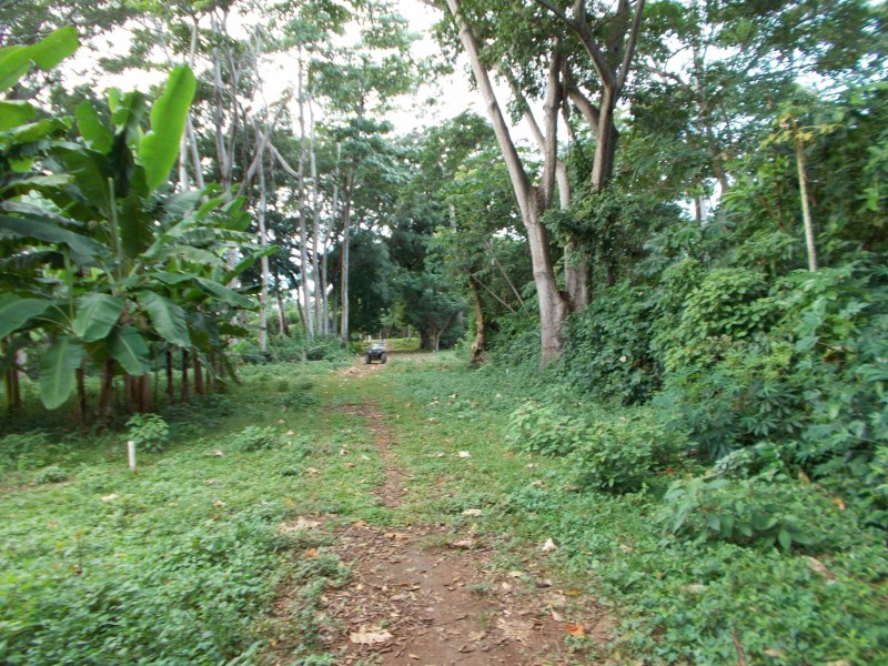 Remax real estate, Honduras, Utila, Mature trees  greeneryFlat arable land near Airport
