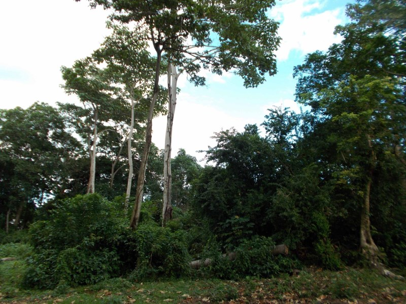 Remax real estate, Honduras, Utila, off Airport Rd. Lot 23Arable Land Great Value