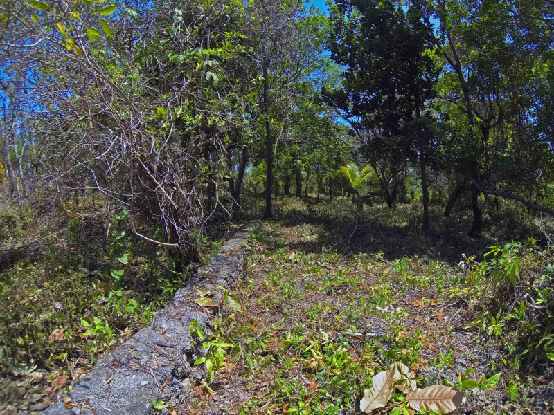 Remax real estate, Honduras, Utila, Lot 7  Green forested Lot0.24 acres Just off Airport Rd