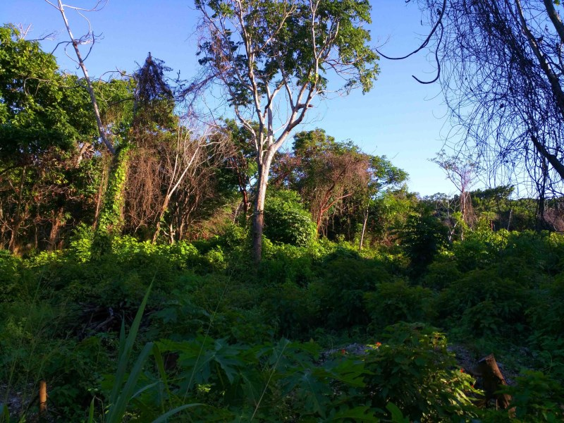 Remax real estate, Honduras, Utila, 0.26ac off Airport Rd. Lot 8Large TreeCovered Home site
