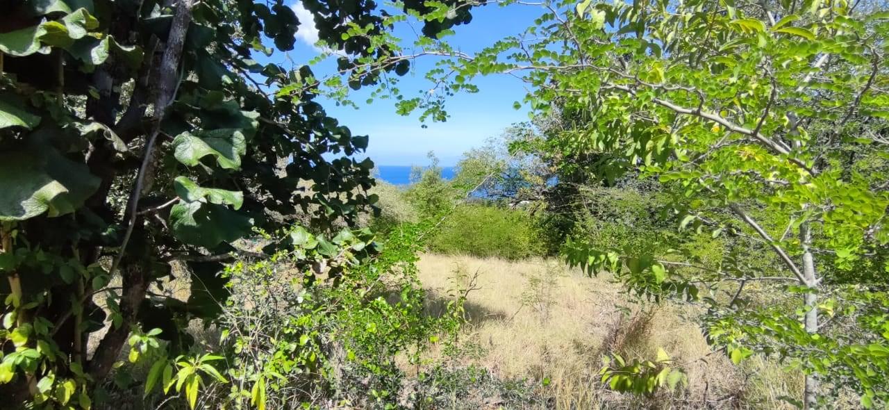 RE/MAX real estate, Guadeloupe, Pointe-Noire, Terrain Vue Mer sur les hauteurs de Pointe Noire
