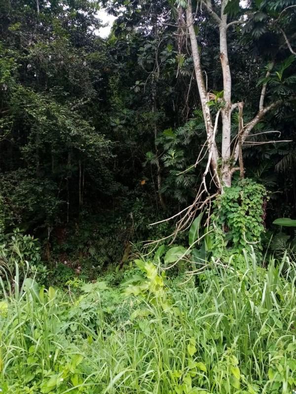 RE/MAX real estate, Guadeloupe, Budan, Terrain à bâtir à vendre