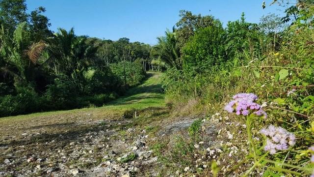 RE/MAX real estate, Belize, Santa Elena, #2381 - RAINFOREST HOUSE LOTS NEAR SAN IGNACIO, CAYO, DISTRICT, BELIZE.