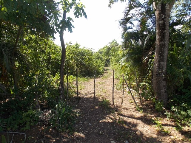 RE/MAX real estate, Belize, Teakettle, (2370) - 23 ACRES OF LAND LOCATED CLOSE TO BELMOPAN, CAYO DISTRICT.