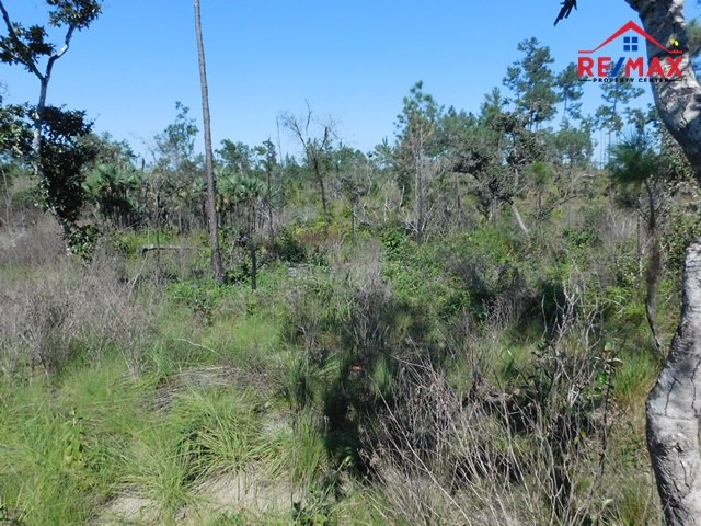 RE/MAX real estate, Belize, Ambergris Caye, #2029 - 5 ACRES OF LAND WITH A CREEK IN THE MOUNTAIN PINE RIDGE RESERVE, CAYO DISTRICT.