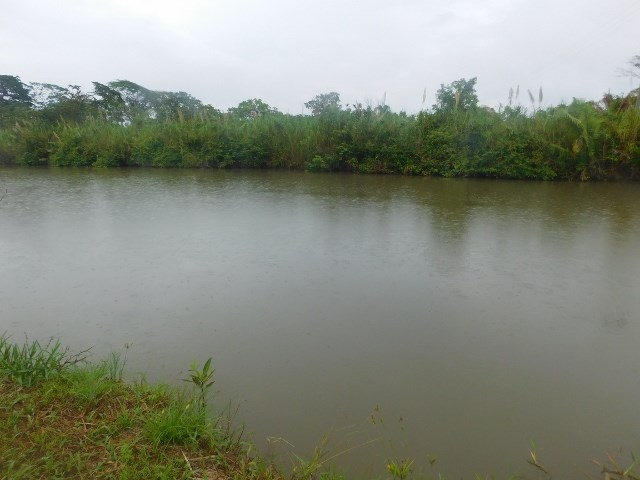 RE/MAX real estate, Belize, Mullins River, (#2077) - 70 ACRES OF RIVERSIDE LAND NEAR DANGRIGA.
