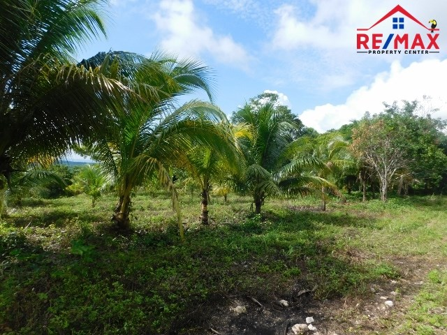 RE/MAX real estate, Belize, San Ignacio, # 4019 - SIX (6) ACRES OF BELIZE LAND - near SAN IGNACIO TOWN, CAYO DISTRICT
