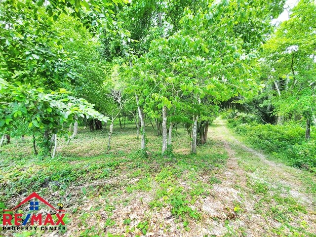 RE/MAX real estate, Belize, San Ignacio, # 4020 - ONE ACRE LOT near RIVER - CAYO DISTRICT, BELIZE