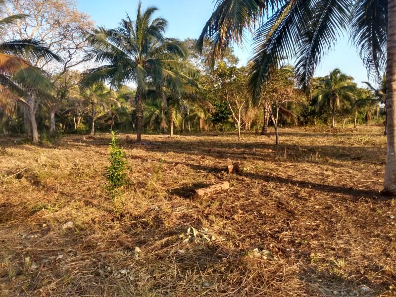 RE/MAX real estate, Belize, Chan Chen,  Peaceful, Development Land near Belize-Mexico Border
