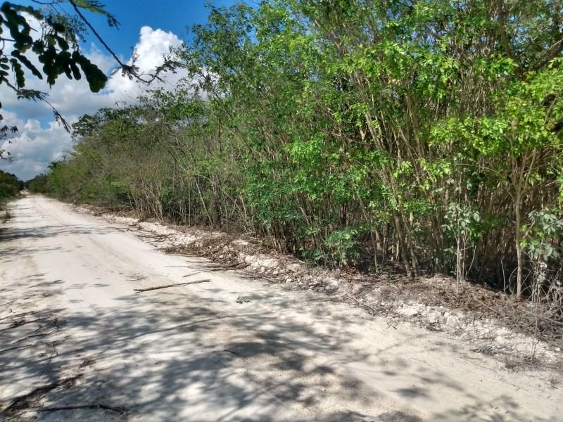 RE/MAX real estate, Belize, Xaibe, 10 Acres Undeveloped Land In Xaibe Village, Corozal District, Belize