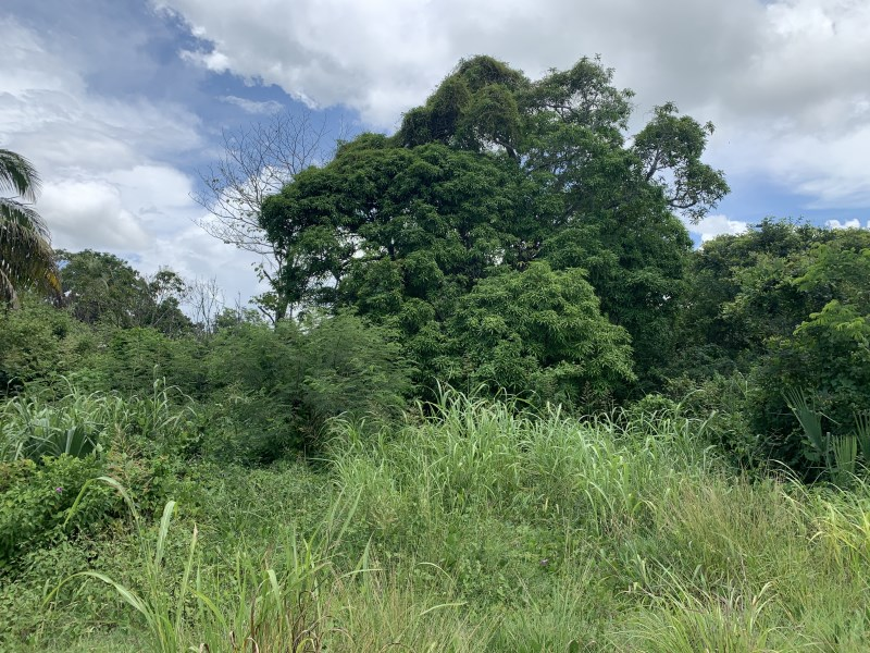 RE/MAX real estate, Belize, Ranchito, 1.52 Acres with Foundation and Well In Ranchito Village, Corozal