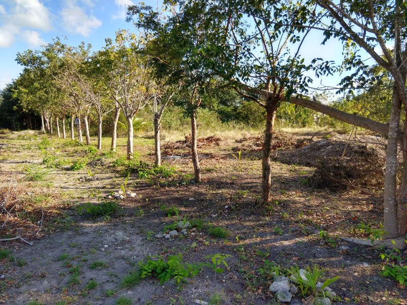 RE/MAX real estate, Belize, Corozal Town, GREAT DEAL On Double House Lot Near Sea In Corozal Town