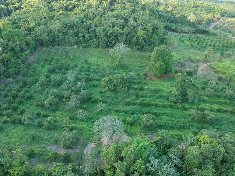 RE/MAX real estate, Belize, Dangriga Town, Turn Key Farm ideal for Citrus Producer in Belize