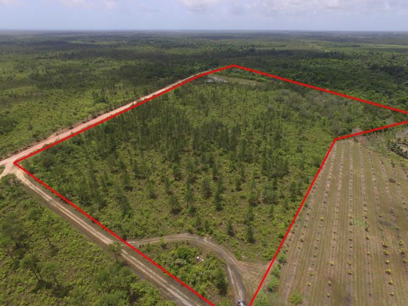 Remax real estate, Belize, Mullins River, 34 ACRES IN HOPE CREEK