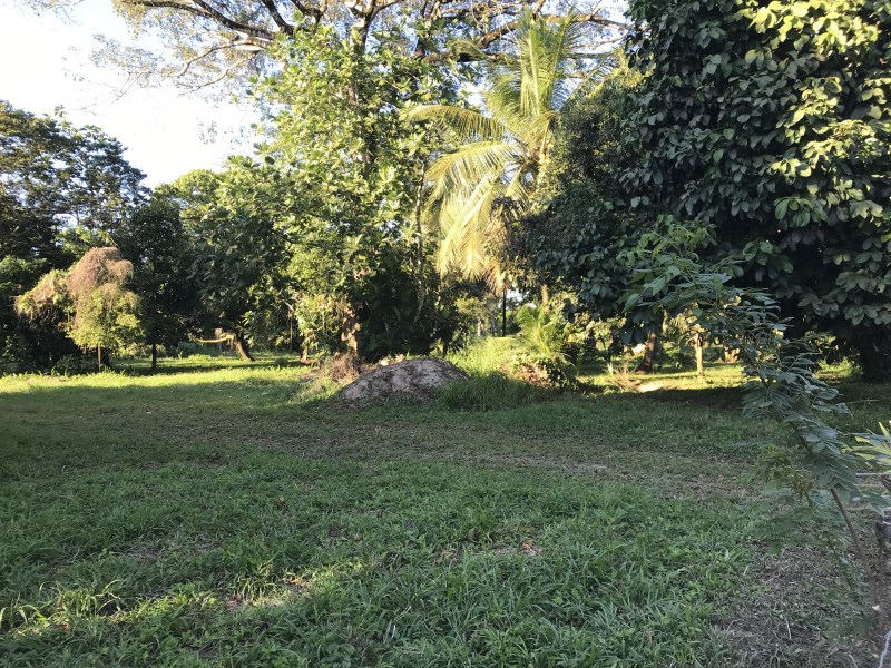 Remax real estate, Belize, Sittee River, L6204 - Acres of fertile land with river access and seller financing