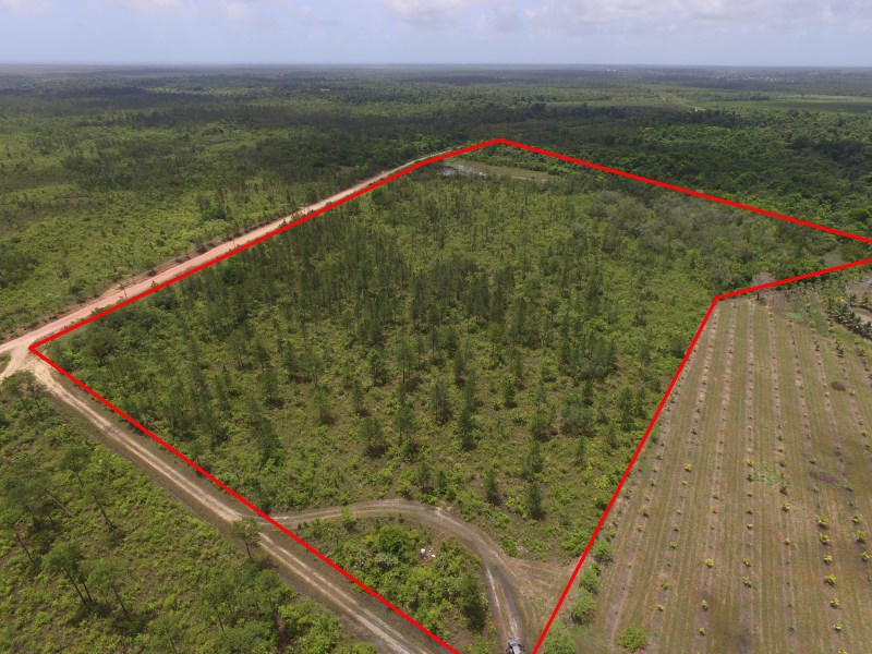 RE/MAX real estate, Belize, Mullins River, 34 ACRES IN HOPE CREEK