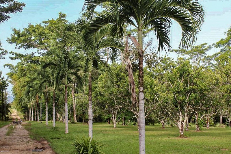 RE/MAX real estate, Belize, Yemeri Grove, 61 Acre Estate