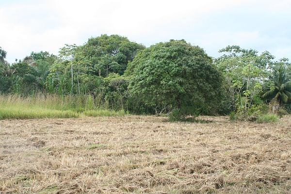 RE/MAX real estate, Belize, Sittee River, 1.156 Acres Riverfront Property on Sittee River bank