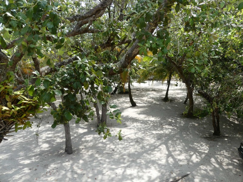 RE/MAX real estate, Belize, Placencia, Large Mature Treed Lot, steps to the Beach