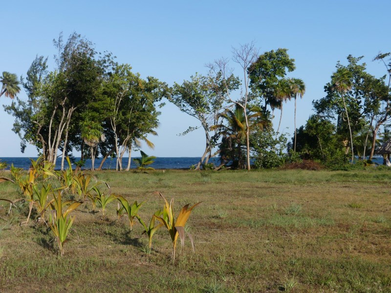 Remax real estate, Belize, Placencia, Large Caribbean Seafront Lot in North Plantation