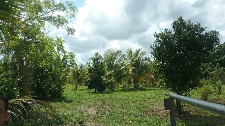 Remax real estate, Belize, Mullins, L9403 - Highway property on Mile 10 Stann Creek Valley, Stann Creek