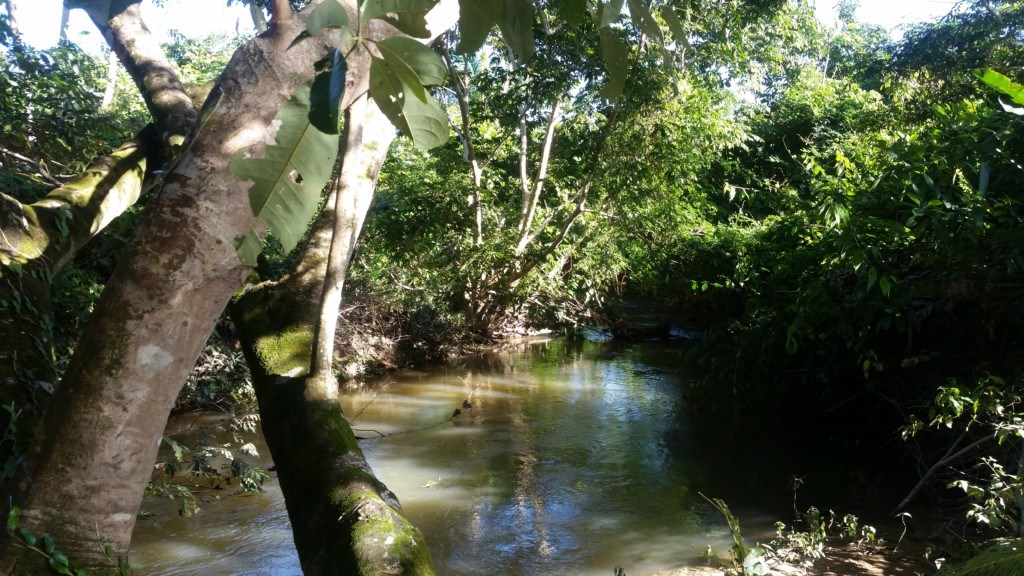 RE/MAX real estate, Belize, Red Bank, 30 Acre Farm on Jenkins Creek - PRICE REDUCED