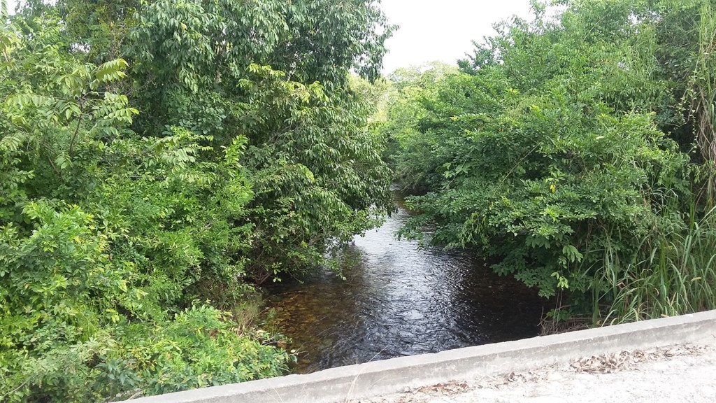 RE/MAX real estate, Belize, Independence, 105 Acres on Big Creek near Independence