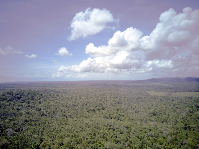 RE/MAX real estate, Belize, Silk Grass, 83 Acres of Lush Jungle in Maya Mountains