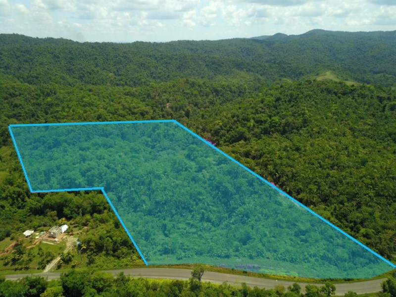 RE/MAX real estate, Belize, Dangriga, 65 acres of Lush Jungle with Creek on the Hummingbird hwy.
